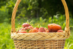 Strawberry in Basket on Grass Royalty Free Stock Photo