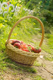 Strawberry in Basket on Grass Stock Images