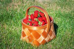 Strawberry in a basket Royalty Free Stock Images