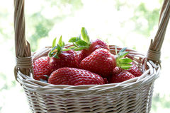 Strawberry in a basket on a motley background. Red, juicy, ripe strawberry in a basket on a motley background Stock Photos