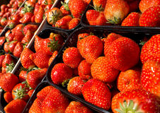 Strawberry Baskets Royalty Free Stock Image