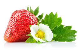 strawberry berry with green leaf and flower Royalty Free Stock Photo