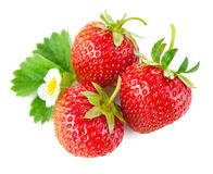 Strawberry berry with green leaf and flower Stock Photos