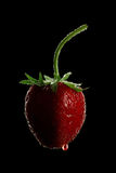 Strawberry black. Strawberry with water drops on black background Stock Photography