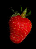 Strawberry on black Royalty Free Stock Images