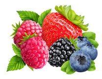 Strawberry, blackberry, blueberry, raspberry isolated on white b Royalty Free Stock Photo