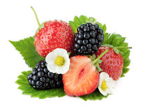 Strawberry and blackberry fruits Stock Photos