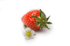 Strawberry with blossom Royalty Free Stock Photos
