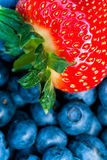 Strawberry and bluberry series. Mixed berries - bluberries and strawberries - series stock image
