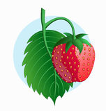 Strawberry on blue background. Illustration of fresh strawberry on blue background Stock Photo