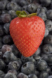 Strawberry on blueberries Stock Images