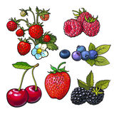 Strawberry blueberry blackberry cherry raspberry vector illustration. Collection of forest berries, vector illustration on white background. Strawberry blueberry royalty free illustration
