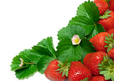 Strawberry Border Stock Photography