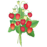 Strawberry  bouquet. Seamless strawberry bouquet field background on grass Stock Image