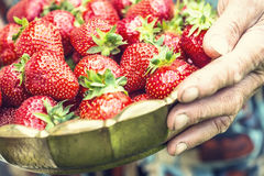 Strawberry. A bowl full of strawberries in the hands of a senior farmer.  Stock Image