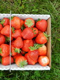 Strawberry in the box Stock Photos