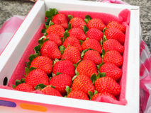 Strawberry in a box stock photos