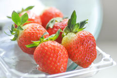 Strawberry in the box Stock Images