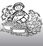 Strawberry and boy. Hand drawn illustration of a boy washing strawberry vector illustration