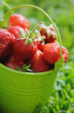Strawberry bucket placed on the grass Royalty Free Stock Photo