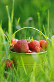 Strawberry bucket placed on the grass Stock Images