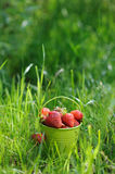 Strawberry bucket placed on the grass Stock Photos