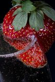 Strawberry in champagne. Macro view of ripe strawberry on side of full champagne glass with black background stock photo