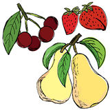 Strawberry cherry pear hand drawn Stock Photos