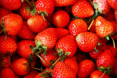 Strawberry, Chiengmai. Fresh strawberry getting from a farm Royalty Free Stock Photo