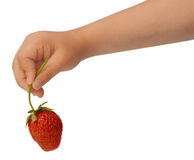 Strawberry in child's hand. Child's hand holding a strawberry. Isolated on white stock image