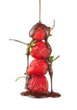 Strawberry in chocolate. Wonderful appetizing strawberries watered with chocolate Royalty Free Stock Images