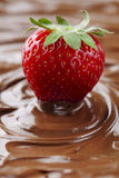 Strawberry in chocolate royalty free stock photo