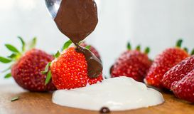 Strawberry with chocolate as dessert. Strawberry with chocolate as fresh bio dessert Royalty Free Stock Photo