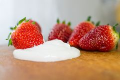 Strawberry with chocolate as dessert. Strawberry with chocolate as fresh bio dessert Stock Photo