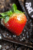 Strawberry chocolate cake Stock Images