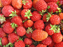 Strawberry close up - berry background Stock Image