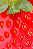 Strawberry closeup detail. Background texture with strawberry closeup detail royalty free stock images
