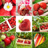 Strawberry collage Royalty Free Stock Image