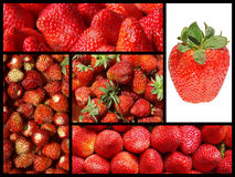 Strawberry collage Stock Images
