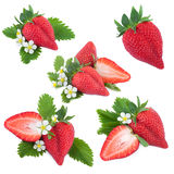 Strawberry Collection Stock Photo