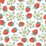 Strawberry collestion 2-02. Vector floral seamless pattern with hand drawn flowers and berries of srawberry on a white background Royalty Free Stock Photography