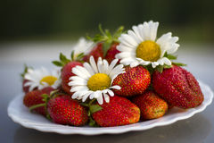 Strawberry with colours of a camomile Royalty Free Stock Images