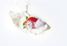 Strawberry in a cream stock photography