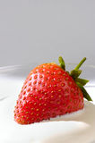 Strawberry in Cream Royalty Free Stock Photo