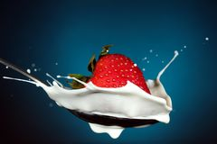Strawberry cream splash. Strawberry falls into a spoonful of cream creating a splash Royalty Free Stock Photo