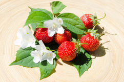 Strawberry crop. Juicy red strawberries with leaves and buds royalty free stock photography