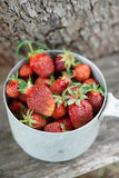 Strawberry crop Stock Photo