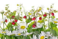 Strawberry daisies meadow fragment Stock Photo