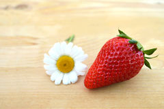 Strawberry and daisy flower Royalty Free Stock Photography