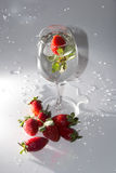 Strawberry delight stock photography
